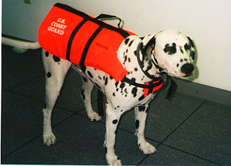 Image of a dog, the CG station mascot with life jacket